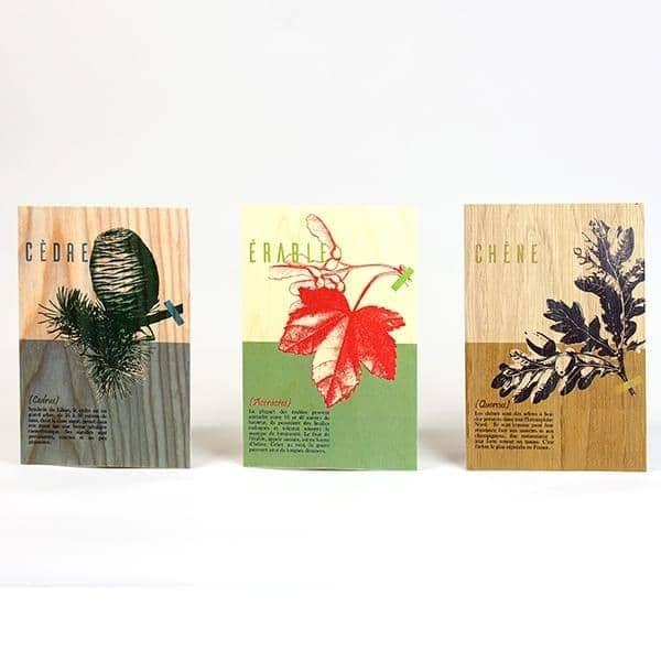 CARTES POSTALES LES ESSENCES DE BOIS, set of 3 wooden cards, beech, oak and maple, eco-design